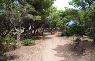 Camino hacia Cala Pilar