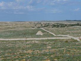 Paret seca y barracas de ganado