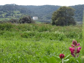 Vegetación en primavera en el tramo 7 del CdC