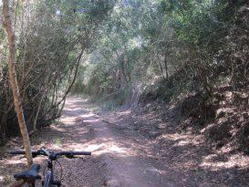 Cala Pilar > Algaiarens - Tramo 7 CdC - IMG_4179