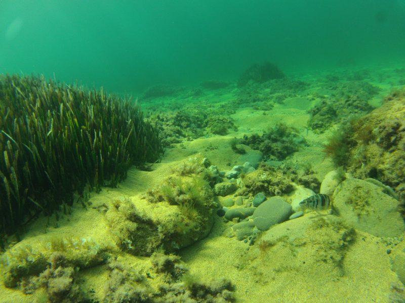 Bottom-marine-Cala-S'elisabet.