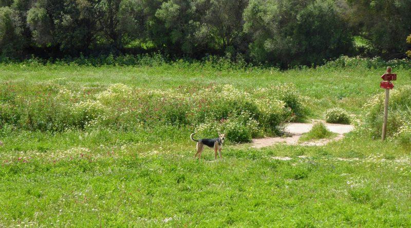 Perro en Cami de Cavalls camino a Cala Pilar